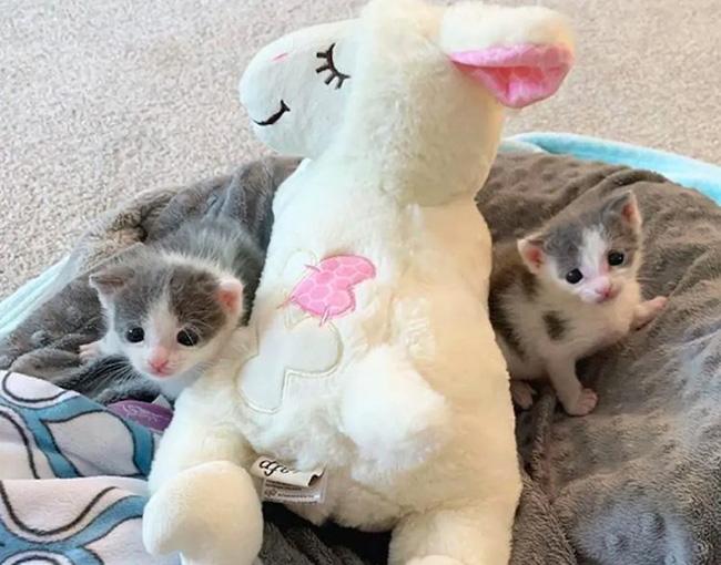Nama Kucing Kembar Kucingcomel Com